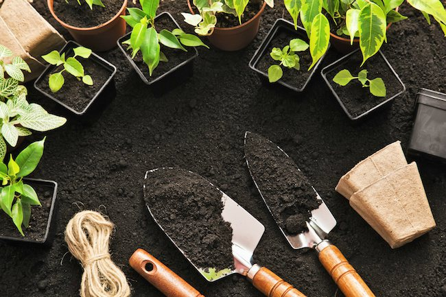 small plant seedlings sitting around soil with shovels
