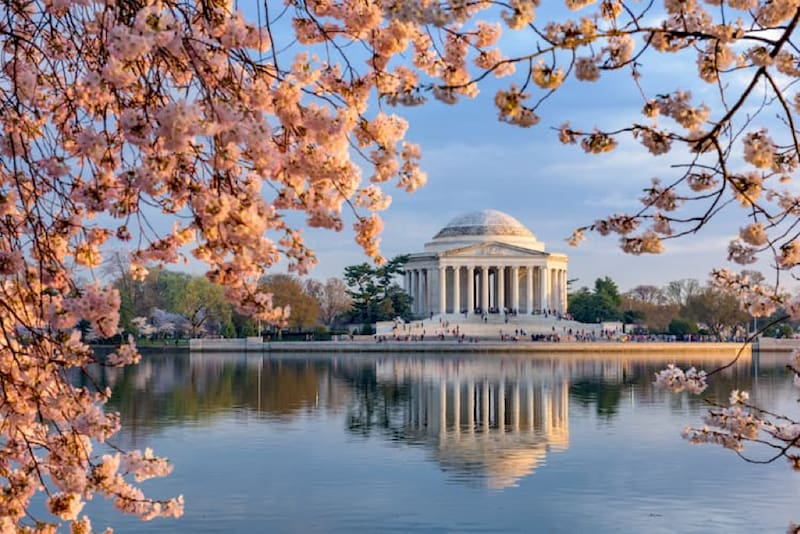 a view of the thomas jefferson memorial from across the pond, with pink cherry blossoms in the foreground